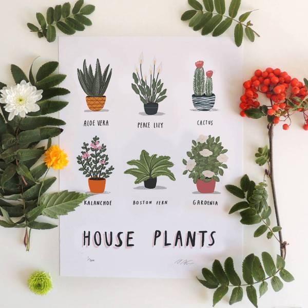 house plant alex foster illustration