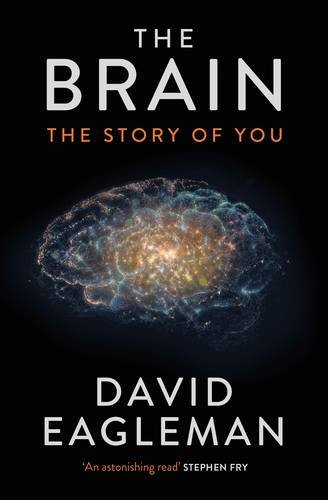 the brain the story of you review